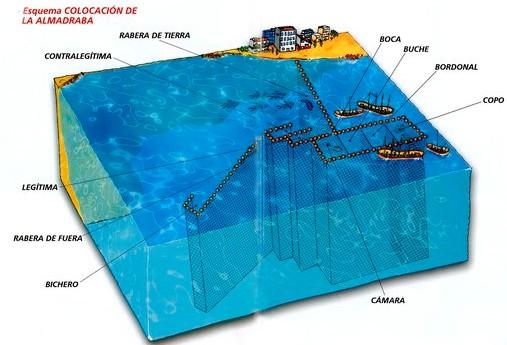 Esquema de cómo se coloca en el mar y cómo funciona una almadraba