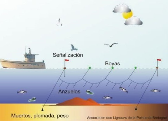 En el dibujo, un esquema del funcionamiento de la pesca con palangre